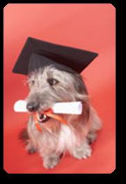Vign_chien_avec_diplome