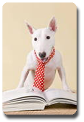 Vign_chien_cravatte