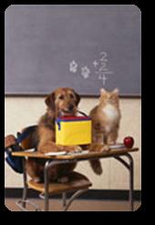 Vign_chien_et_caht_a_lecole