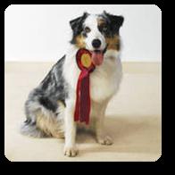 Vign_chien_medaille